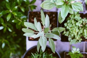 Plant Something Weekend