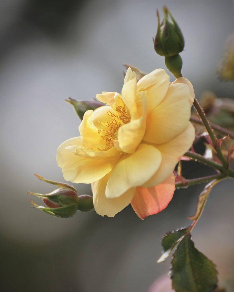 Maine Flower Show