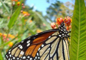 Plant a Pollinator Garden!