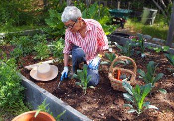Plant Something! Weekend