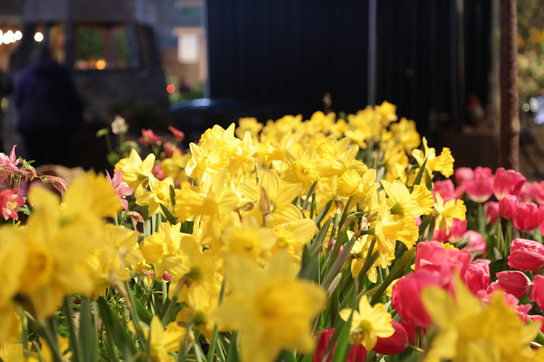 Maine Flower Show Tickets Flower Inspiration