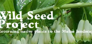 Wild Seed Project